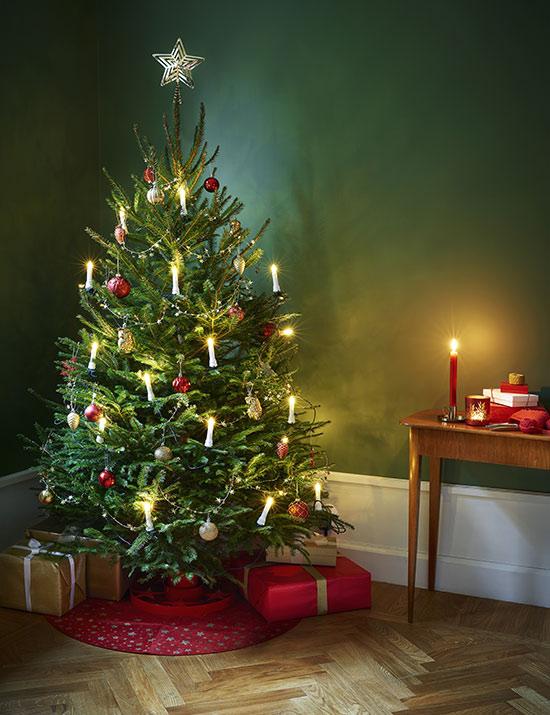 Julgran från Grankungen
